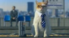 Cat Business Trip