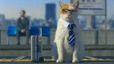 Cat Business Trip