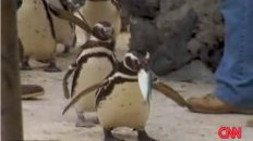 Gay Penguins Break Up