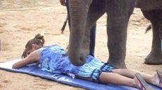 Elephant Massage in Koh Samui, Thailand