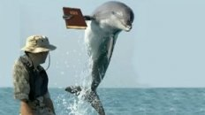 The Porpoise Driven Life