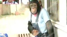Chimp Washes Bear