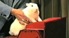B.B. Bunny
