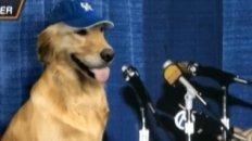 Kentucky Violated NCAA Rules While Recruiting Basketball-Playing Dog
