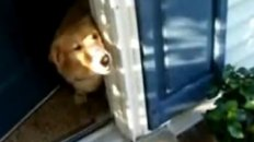 Dog Cries When Soldier Returns Home