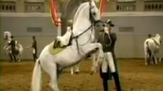 Lipizzaner Stallions, from Battle to Ballet