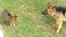 Small Cat vs Large Dog