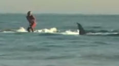 Surfing with a Great White Shark
