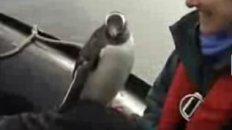 Lucky Penguin - Antarctica