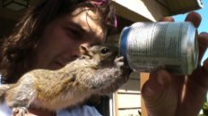 Andy and His Best Friend Mearl the Squirrel