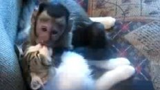 Monkey and Cat Make Out