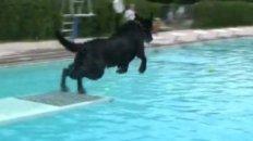VIDEO: Dog Dayz 2009