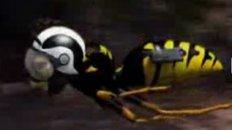 The Kamikaze Wasp