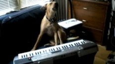 Porter the Musical Dog Plays the Casio!