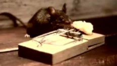 Mouse Fitness