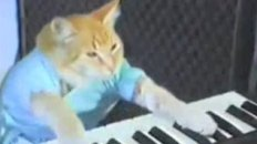 Keyboard Cat: True Internet Story