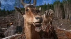 Arbor Day Gazelle
