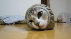 Worm Cat